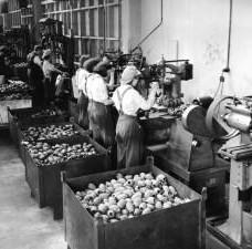 Masport Factory